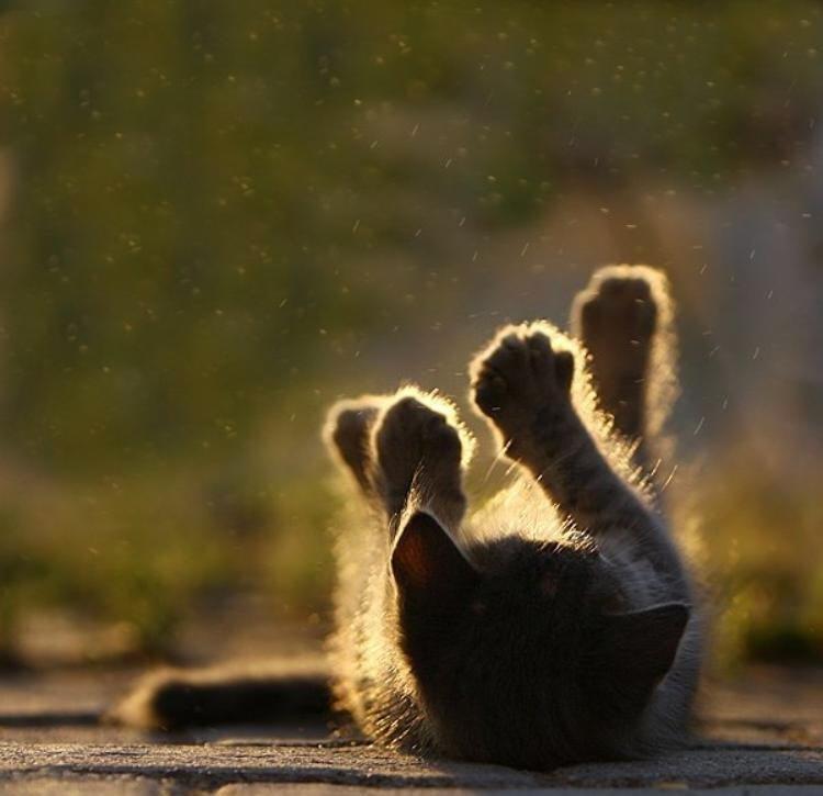 Днем рождения, солнечный зайчик смешные картинки