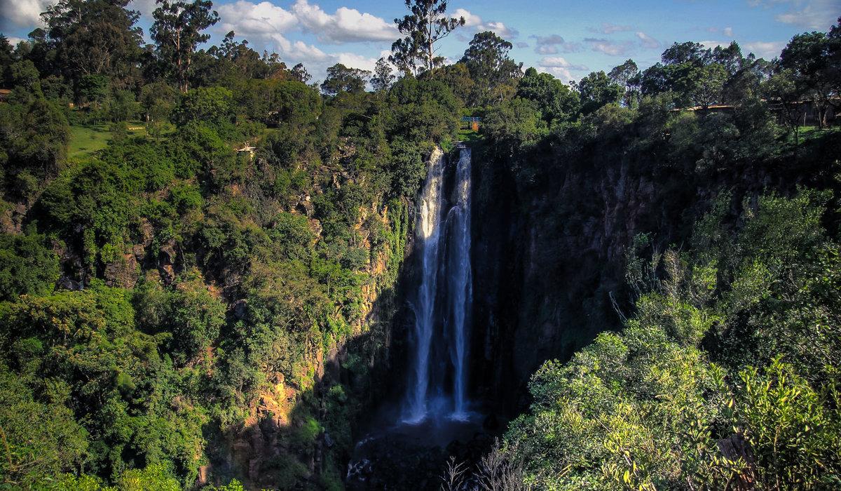 кувшиночник, водопады томпсона фото лапках светлая, них