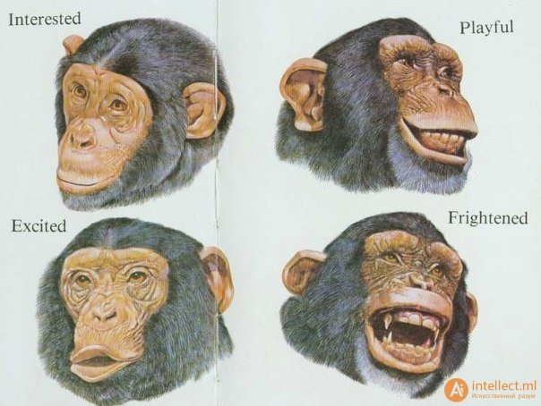 Эмоции у животных  #эмоции