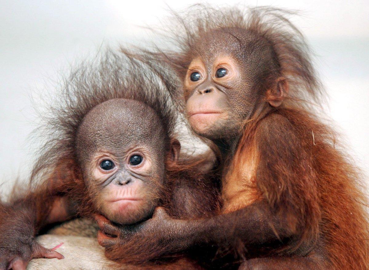Открытка, прикольные обезьянки картинки