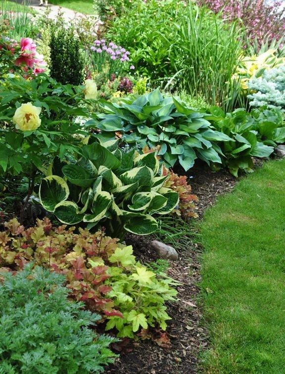теневыносливые растения – вот решение для надела, который большую часть суток пребывает в тени