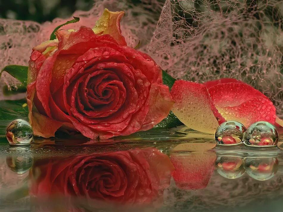 открытки с розами отражающие в воде лучше