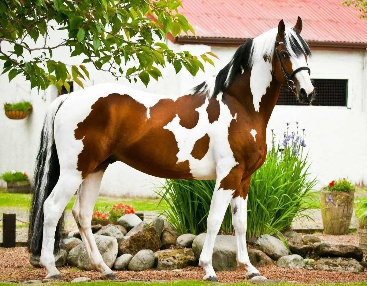Необычные картинки с лошадьми