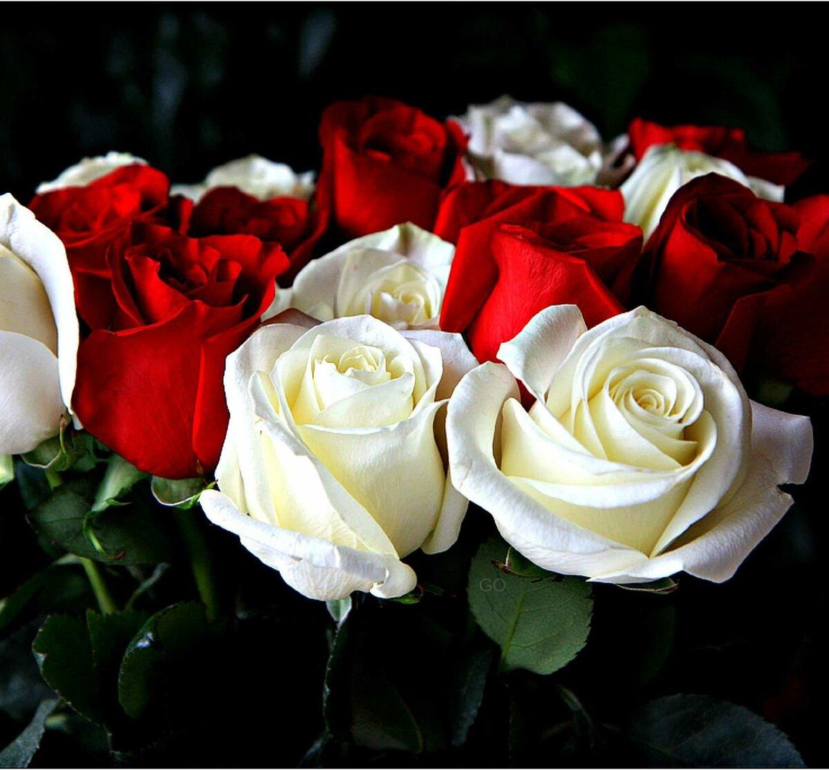 Картинки с розами красными и белыми