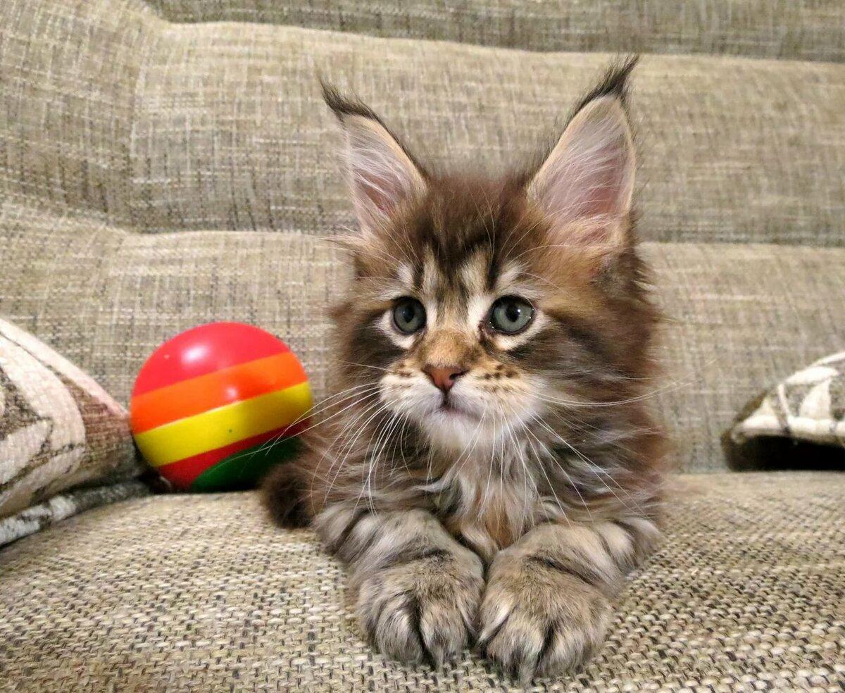 Котенок прикольная картинка