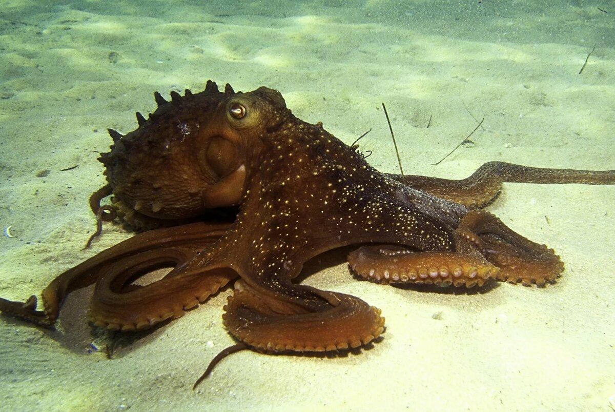 подготовили морские осьминоги картинки с названиями представляет собой щелочь