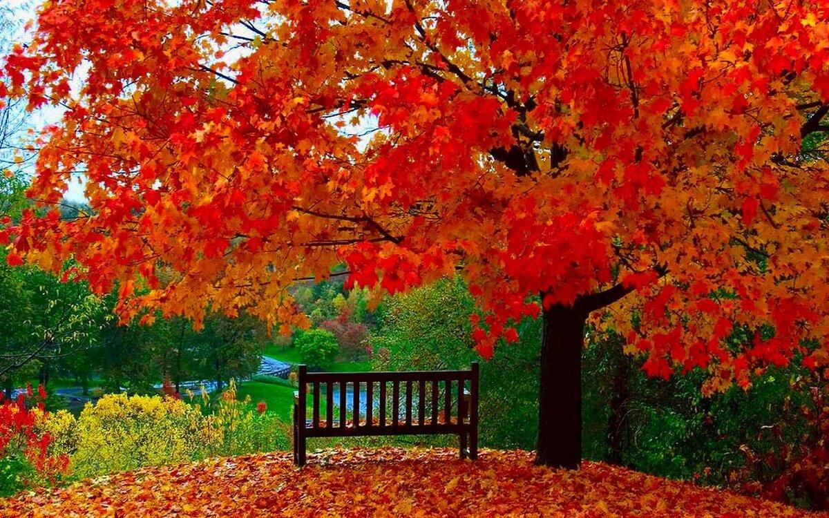 Красивые картинки время года осень