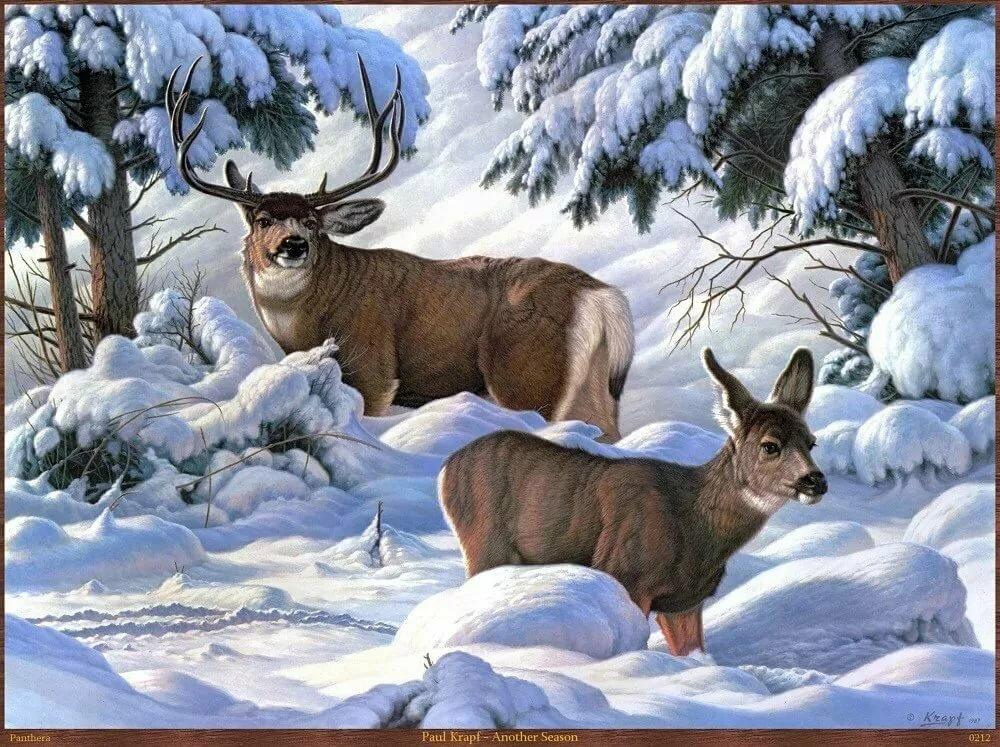 Картинки о зиме и о животных в лесу