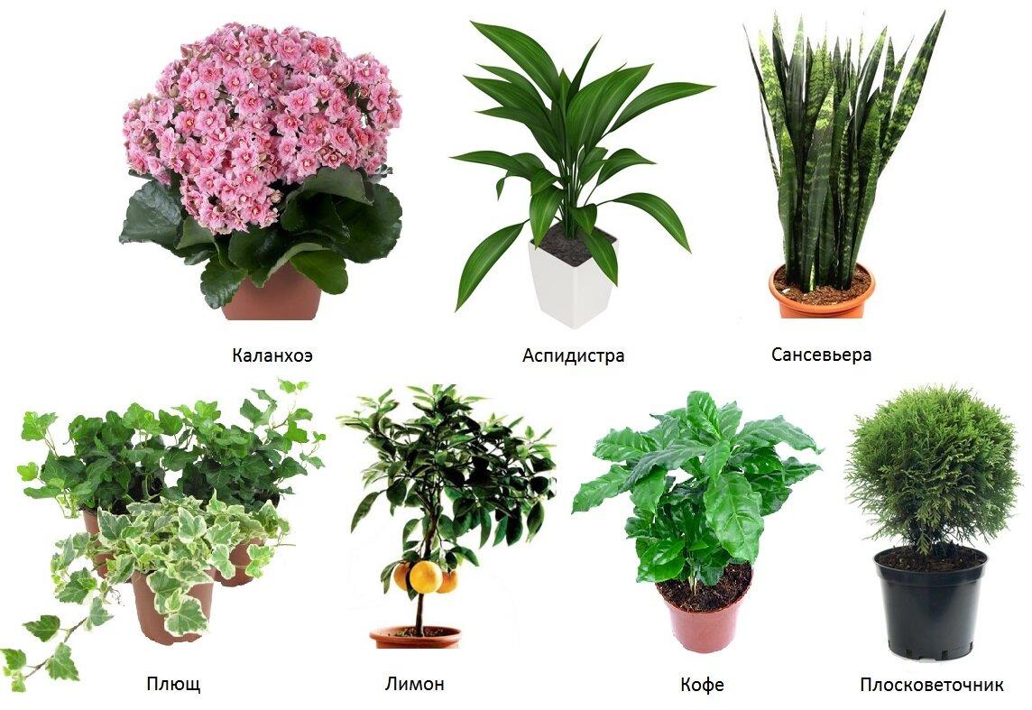 картинки домашних растений с названиями математика