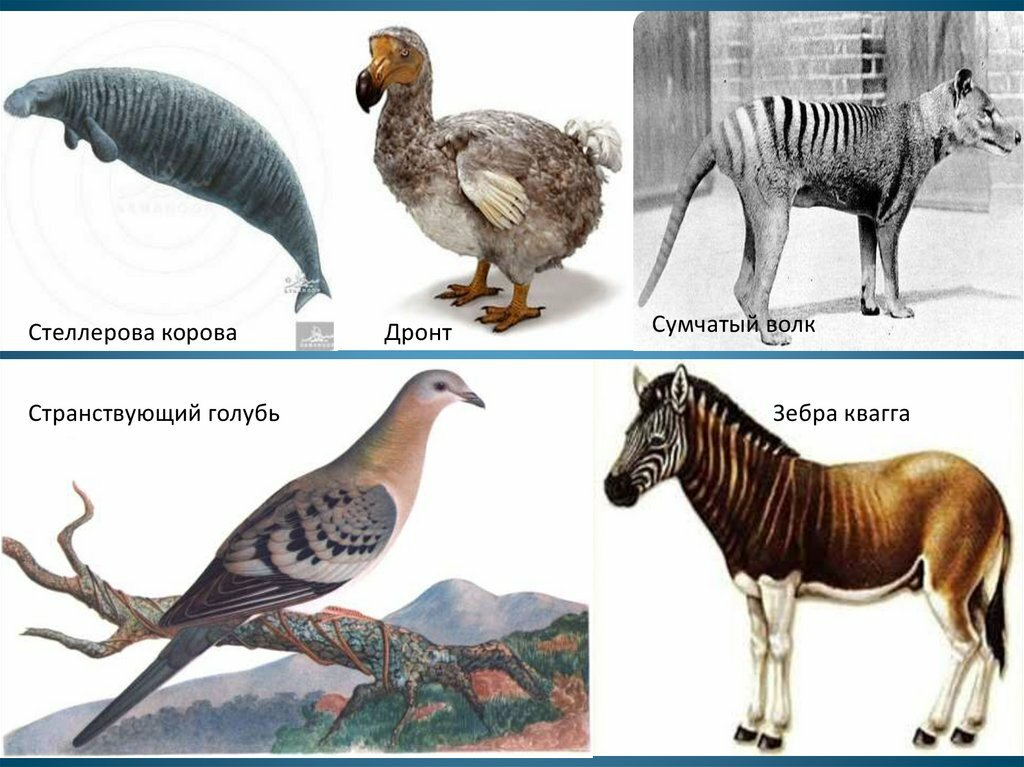 исчезнувшие животные и птицы в картинках раз