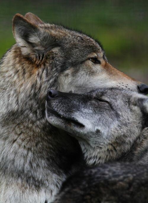 Красивые картинки с поцелуями для любимого мужа как автофокус