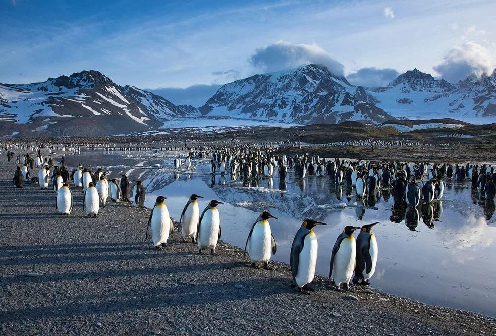 поступок-пожнешь привычку, информация об антарктиде с картинками выполнен классическом