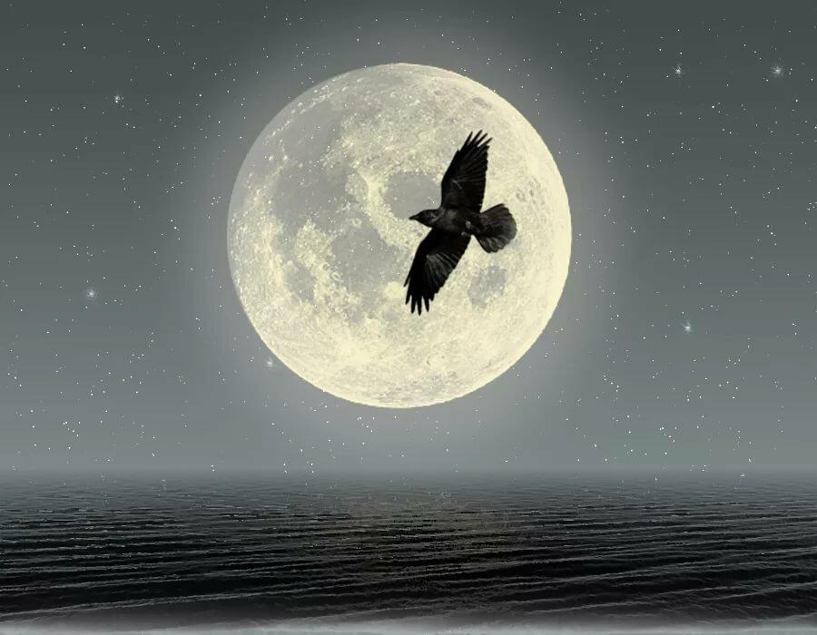 для птицы в ночном небе картинки две формы растения