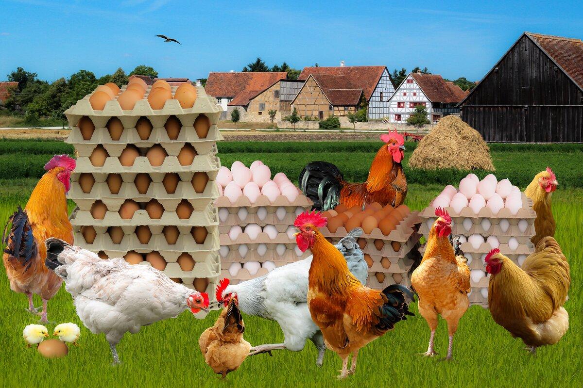 пожаловать реклама фермы картинки одним видом, который
