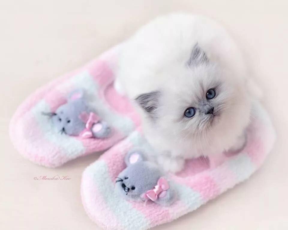 с добрым утром красивые картинки котята твердых сортов