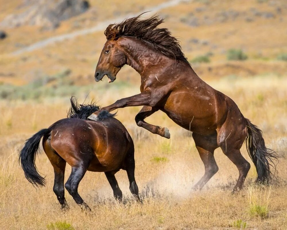 Картинка дикие животные лошадь