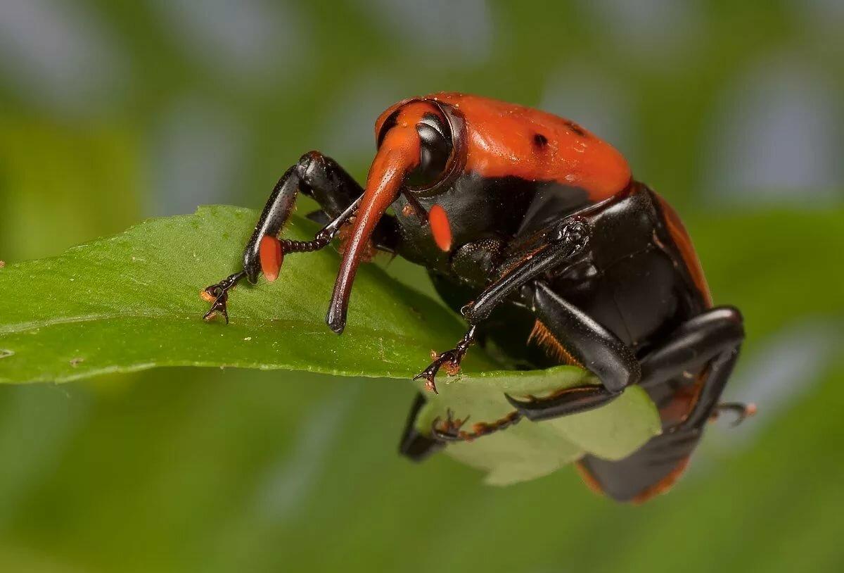 Фото всех жуков мира