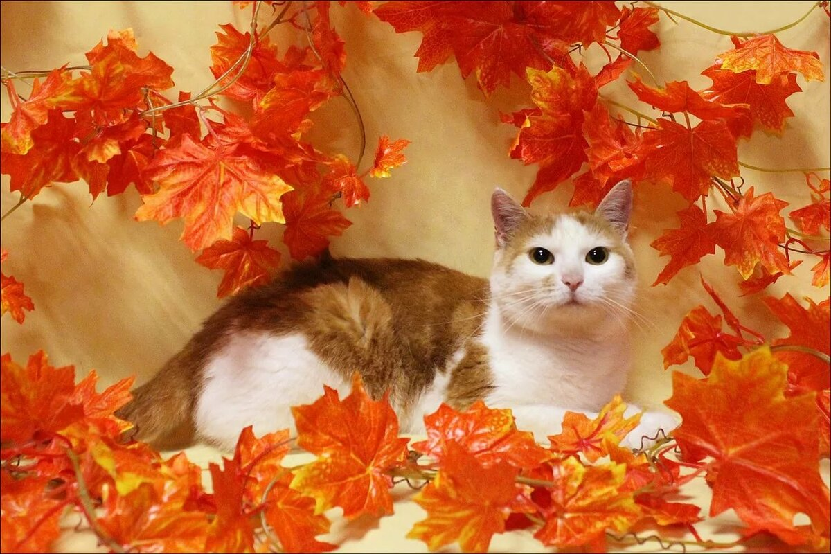 Картинки с осенними котами