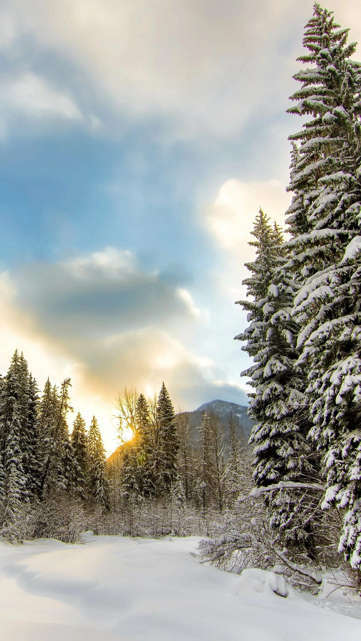 Фото зимы леса на телефон