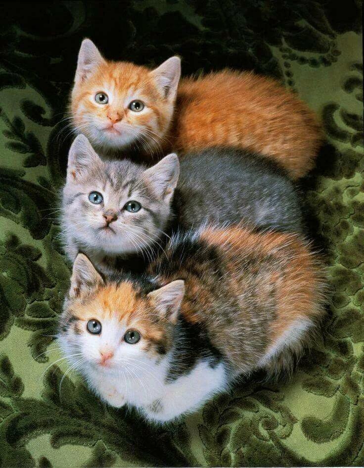 Картинка три кошки