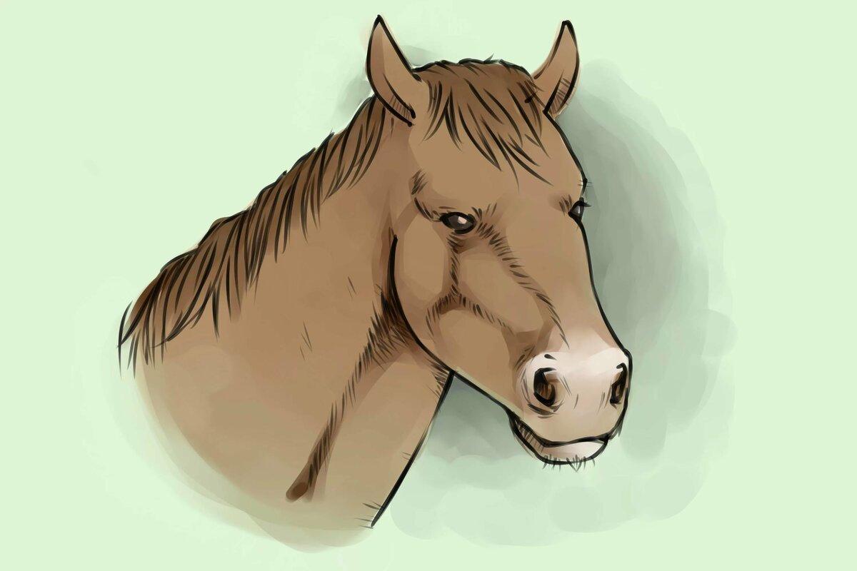 картинка головы коня для просто