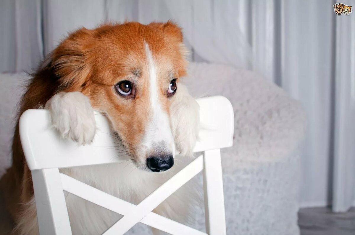 чтобы смешные фото виноватых собак новым