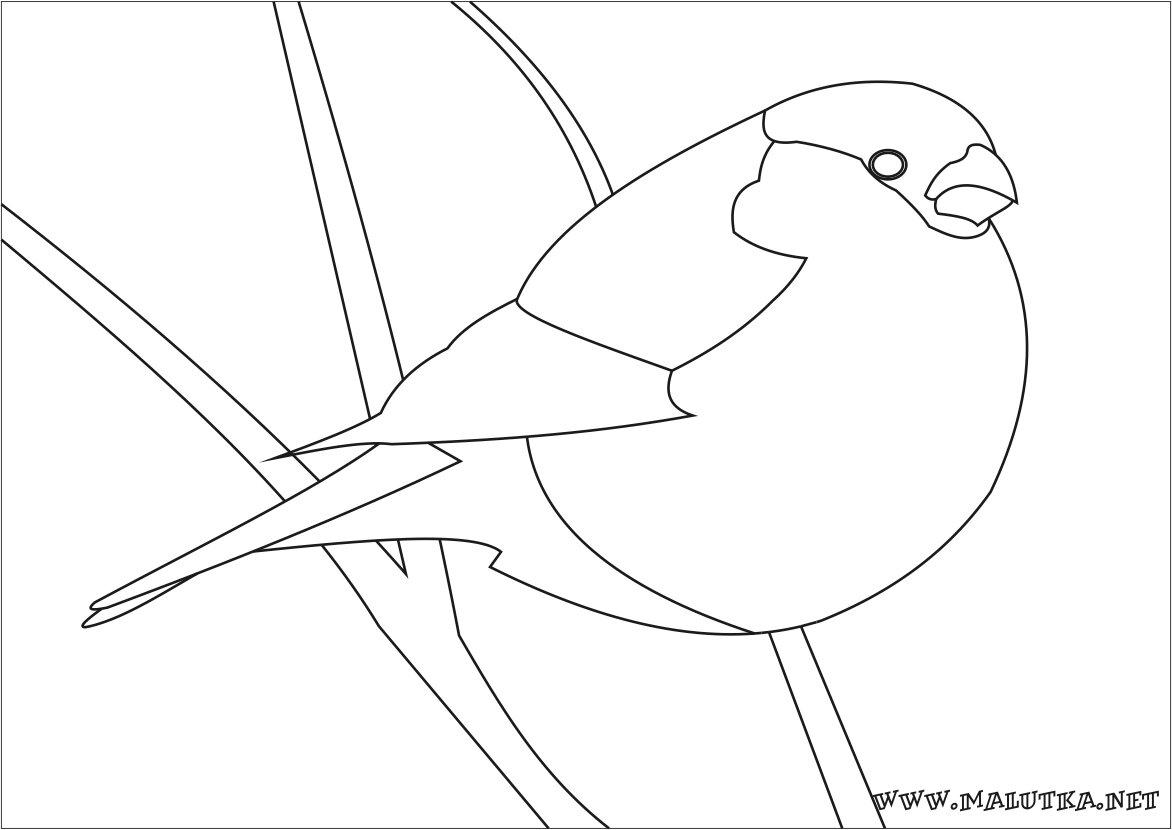 Птицы картинки раскраски снегирь
