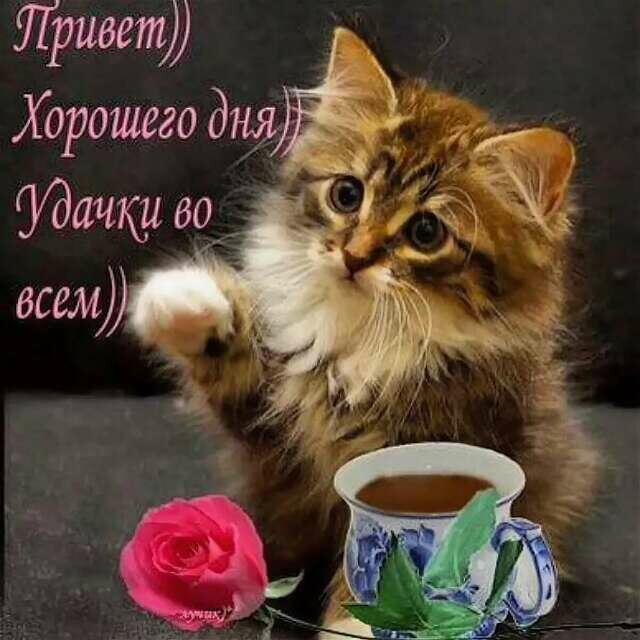 Картинки котят с пожеланием хорошего дня
