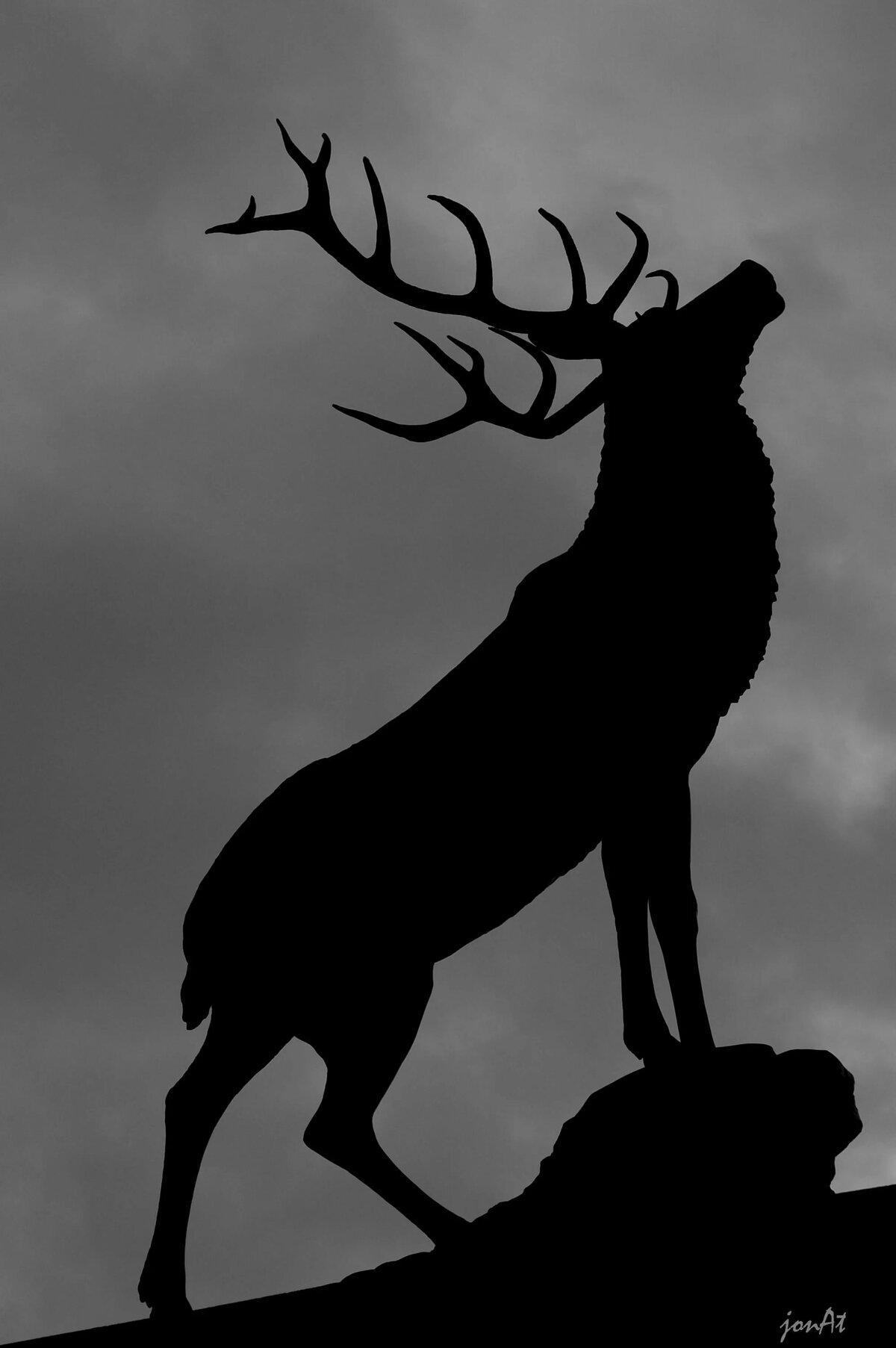 Картинки черно белые лес и животные