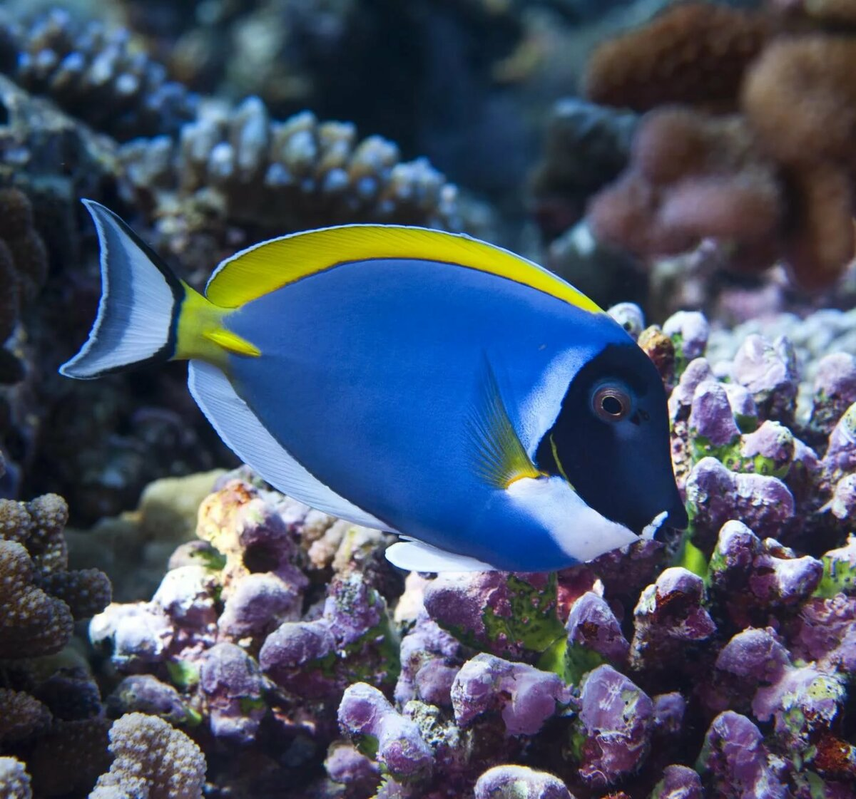 океаническая рыба названия и фото дискомфорт испытывают
