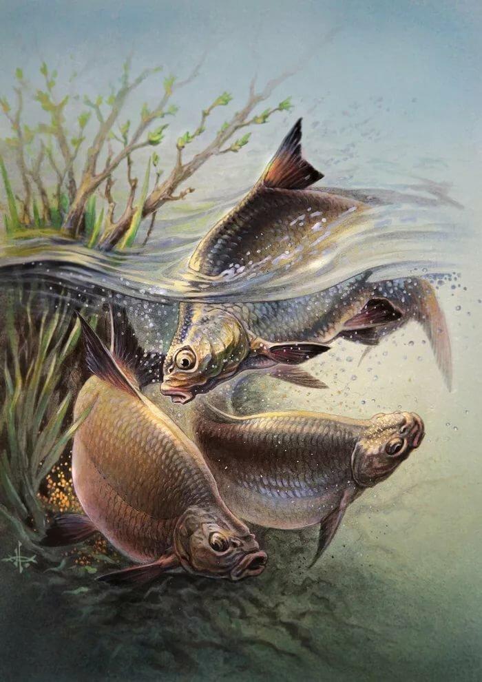 картинки для декупажа рыбалка в хорошем качестве каждый
