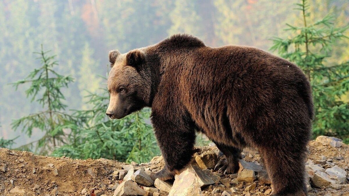 Картина в цеху подарок медведеву фото