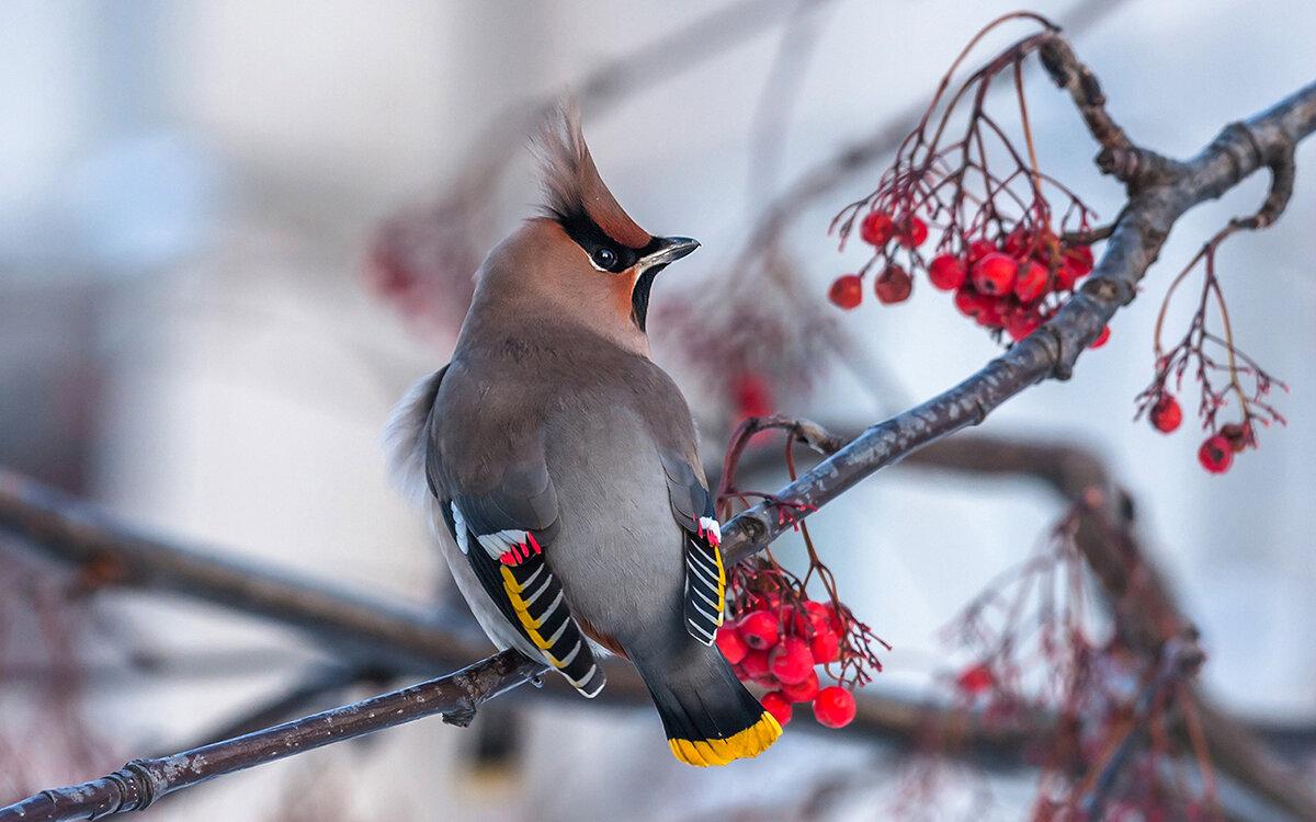 зимние птички фото информацией