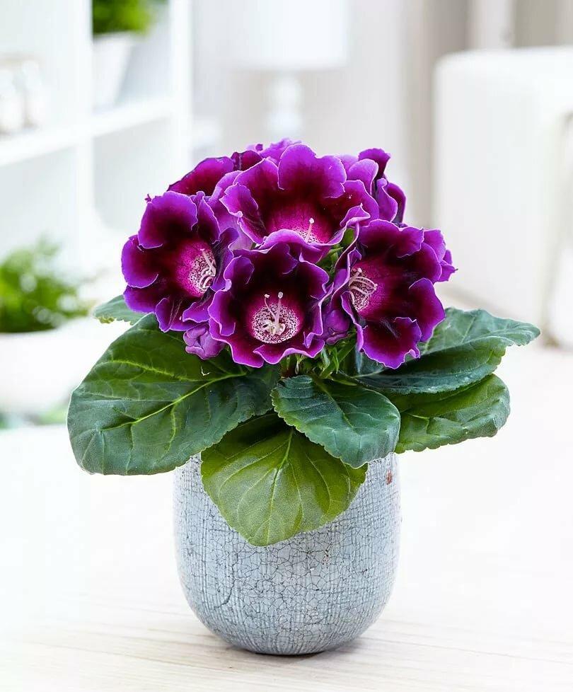 Самый красивый цветок в горшке фото названия