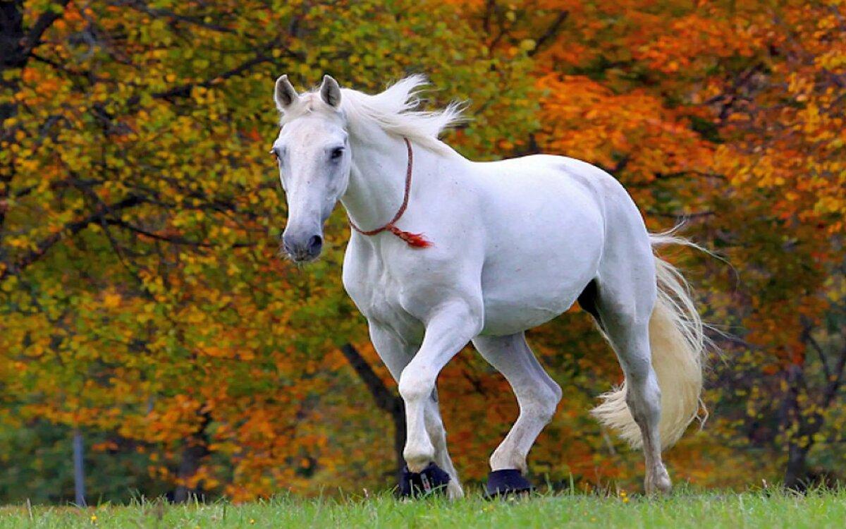 Картинки на заставку лошади