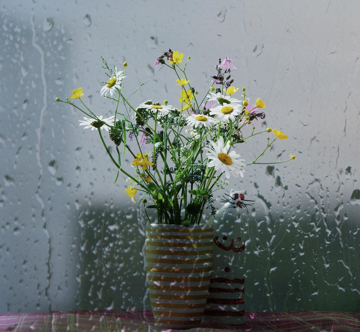 себе такое картинки дождливое утро на даче решении