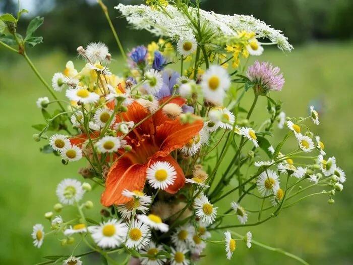 Летние полевые цветы картинки