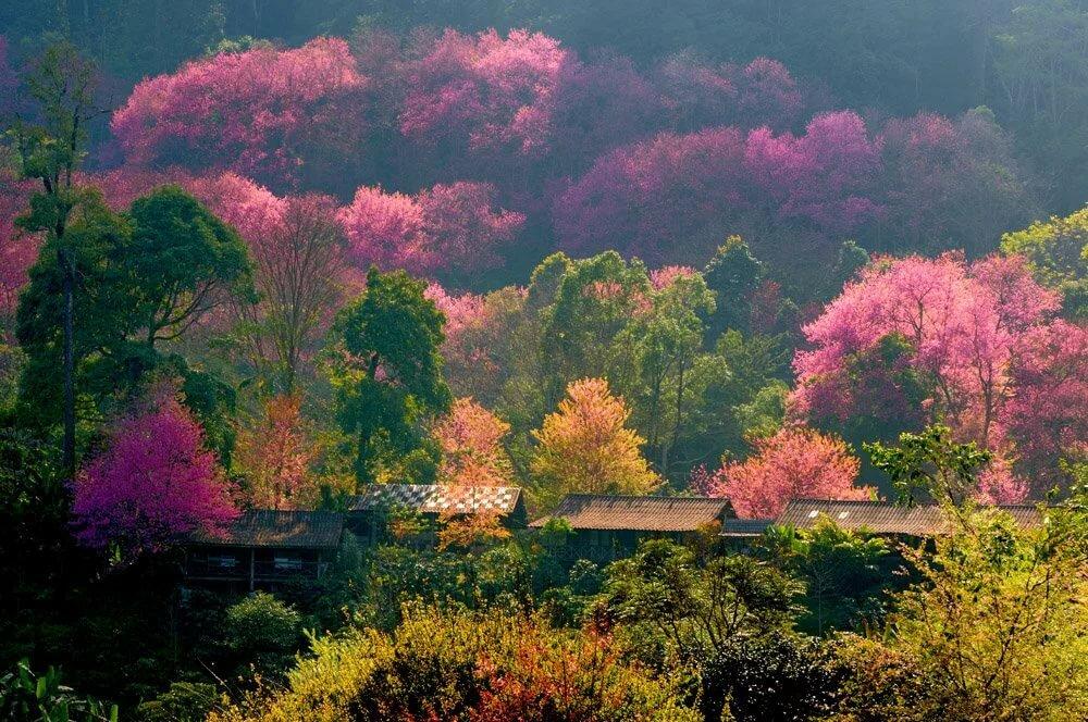 шьем картинка красота разные японии него, гату