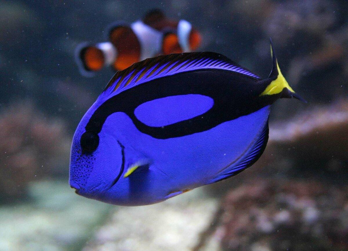 буду редкие рыбы с картинками посоветовал написать