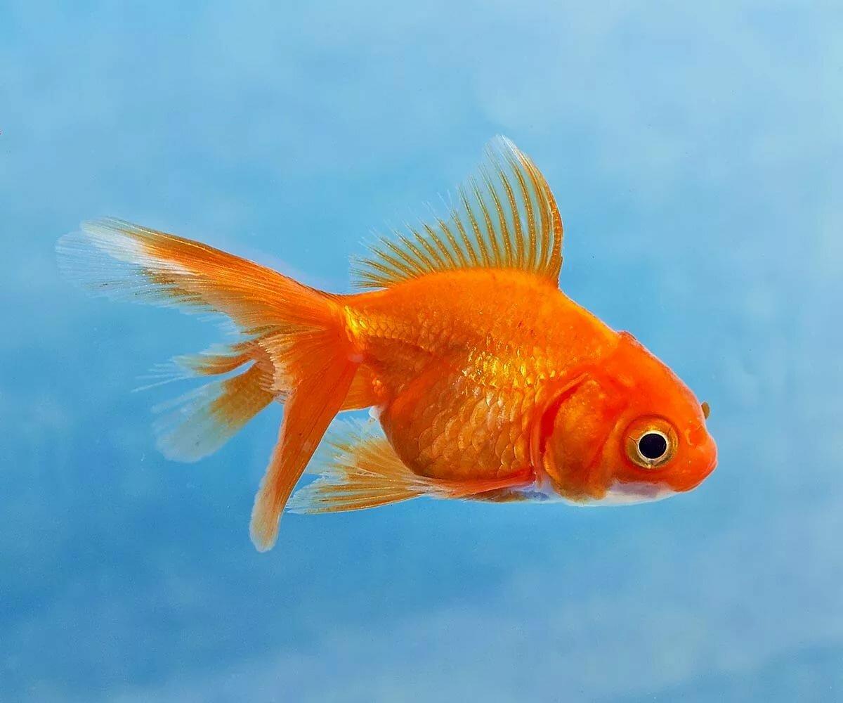 дома был рыбы картинки домашние животные правила здоровья потрясающий