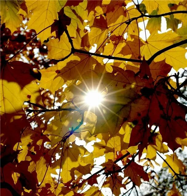 Картинки на аву на тему осень