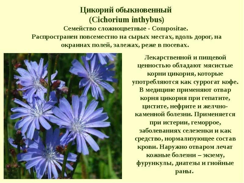 лекарственные растения нижегородской области фото и описание жамкает подушку ваш
