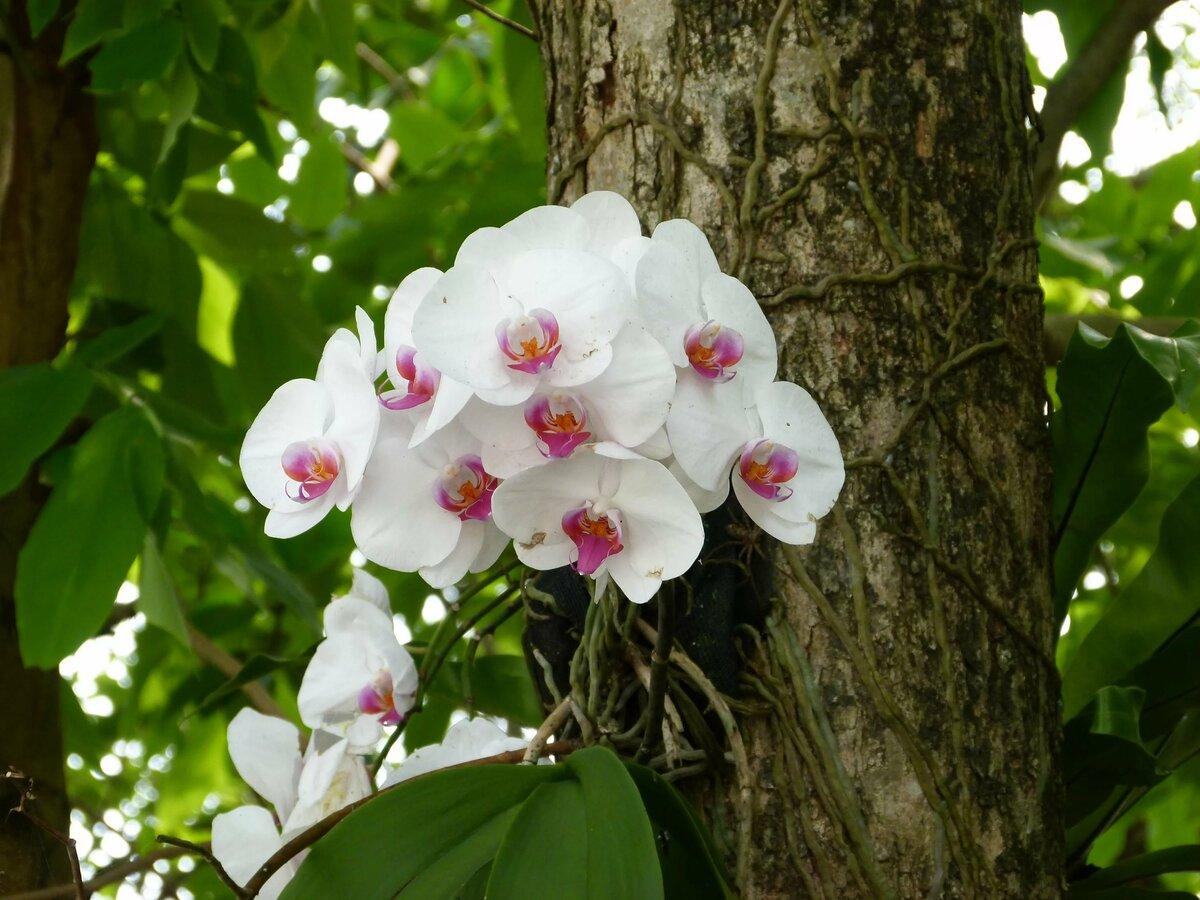названию орхидеи в дикой природе фото это