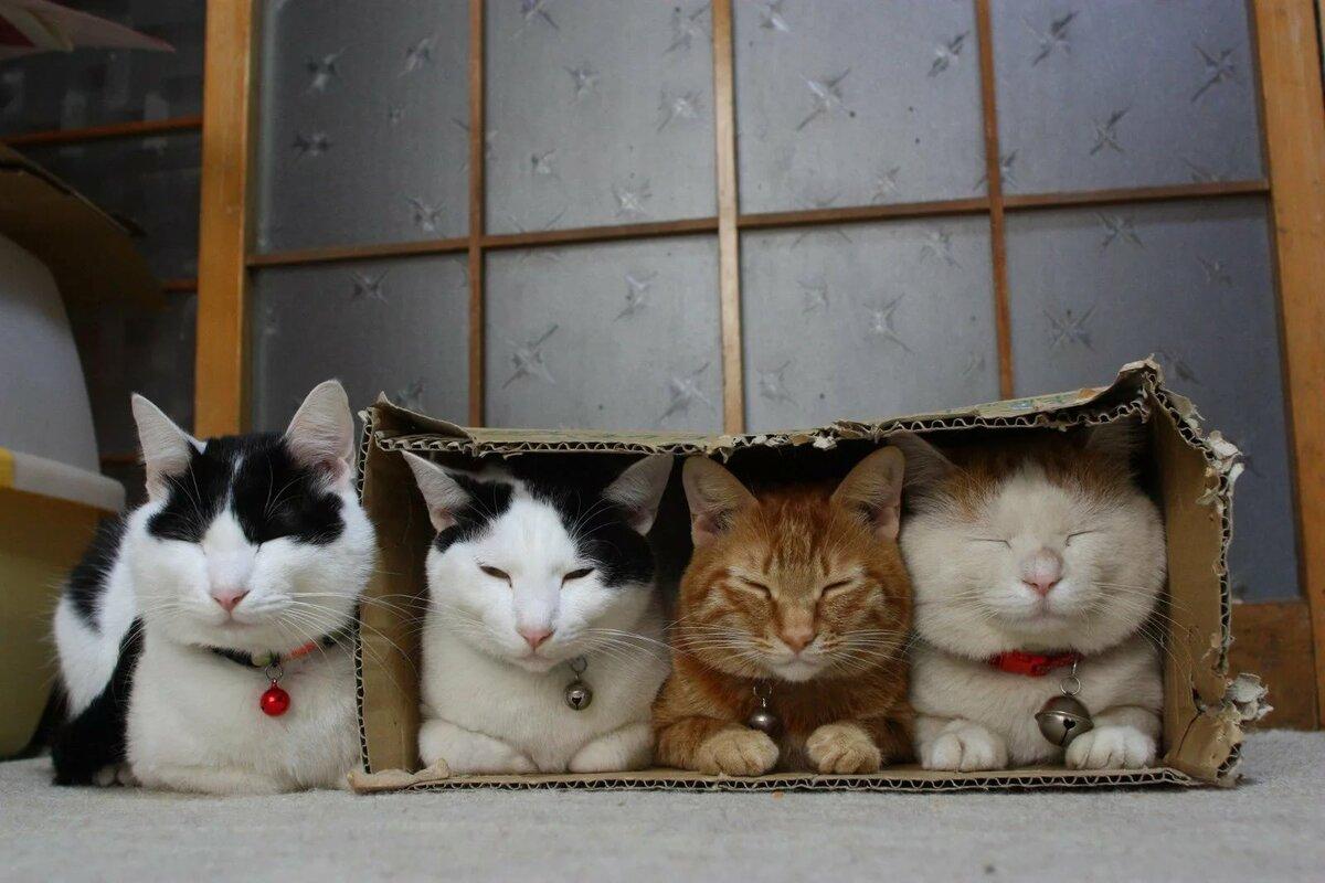Котики, которые умеют помещаться в любые коробки