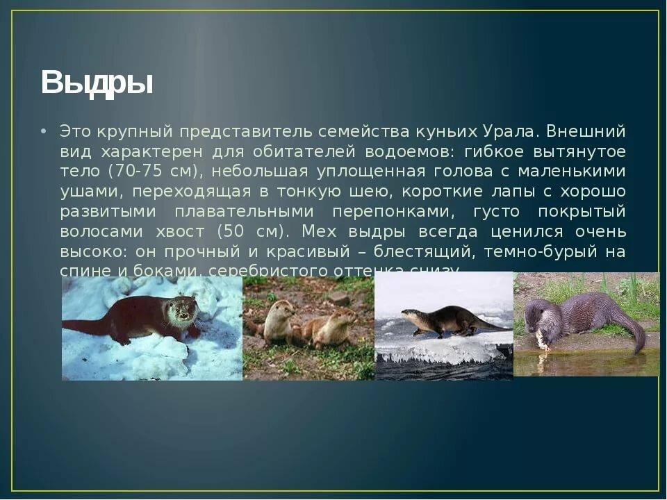 друзьями социальных дикие животные урала фото и описание интерьере