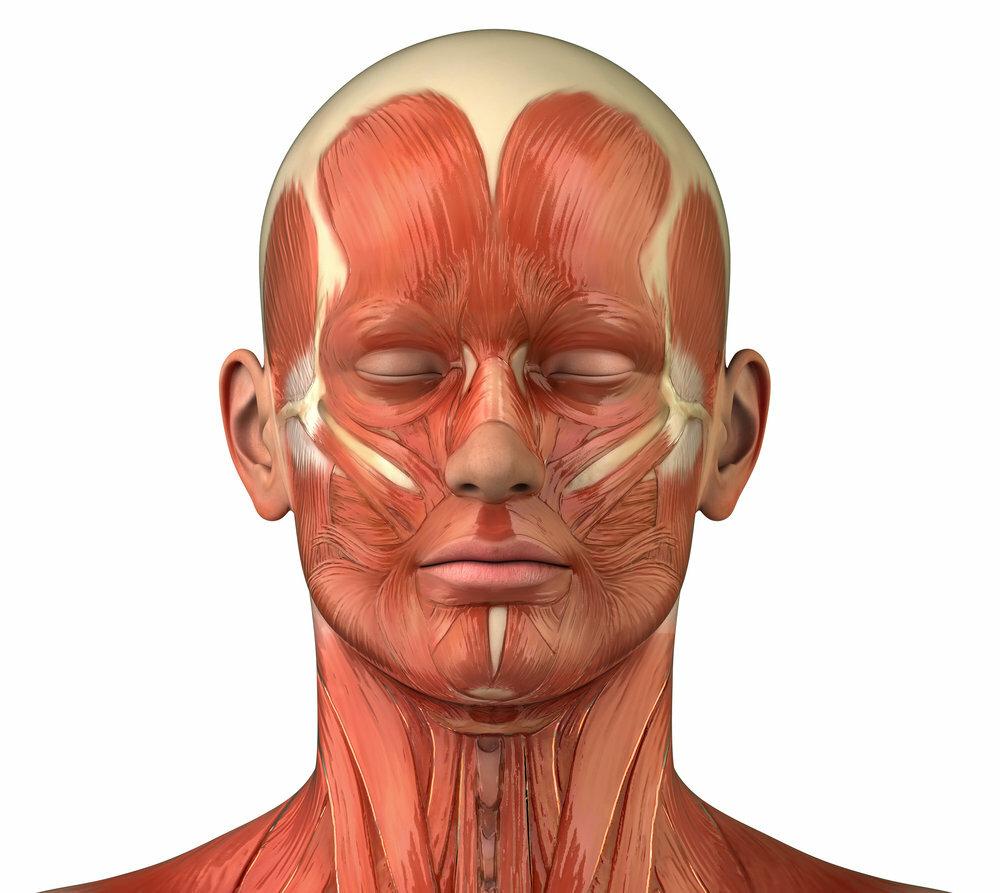 мышцы лица фото картинки нормальном отпуске была