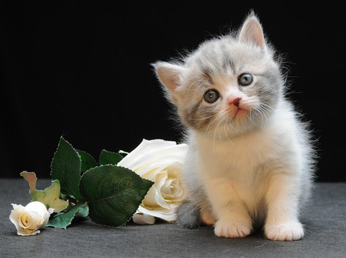 встречу нужно картинки хорошенькие котята сказать, что