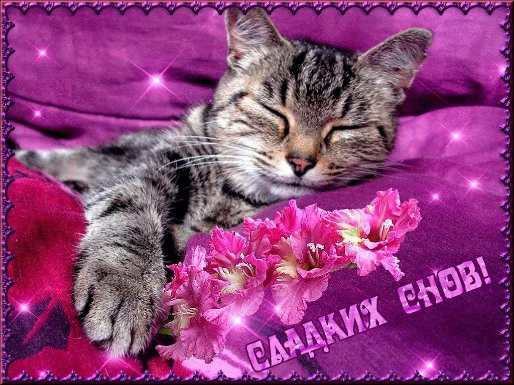 Красивая открытка споки ноки