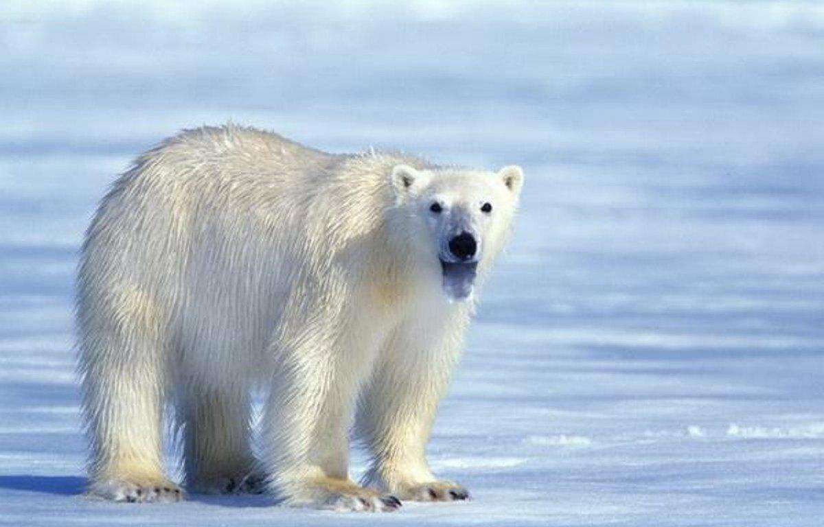 гадают, смотреть картинки про диких животных заразных