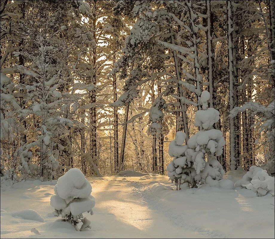 низкокалорийный картинки зима в лесу анимация большую роль